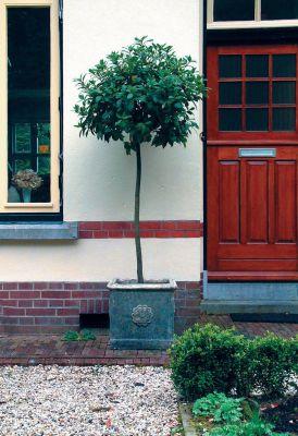 Tudor Rose Urn Stone Plant Pot - Large Garden Planter