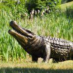 Crocodile Life-Size Bronze Metal Garden Statue
