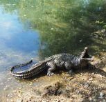 Baby Crocodile Bronze Metal Garden Ornament