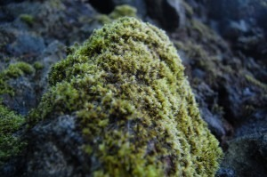 Creating That Mossy Look For Your Garden Statues