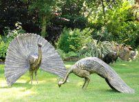 Majestic Peacocks Life-Size Bronze Metal Garden Statues